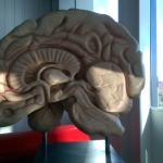The last prototype of Brain