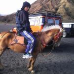 On Horseback to Mount Bromo