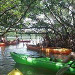 beautifull mangrove tunnels