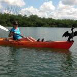 cormorants love orange kayaks