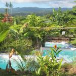 Ecolodge's pool nestled in tropical luxuriance