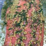 Graved Lachs