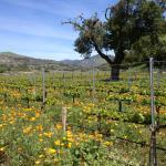 Enjoying local wineries