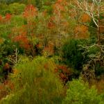 Coastal forest in November, right outside our room