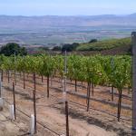 beautiful views of the Vineyards