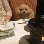 レストランは愛犬も同席