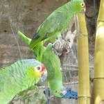 The Funny Parrots