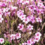 Blumen auf dem Gelände des Inn2Wilderness
