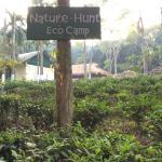 Eco-camp with tea plantations