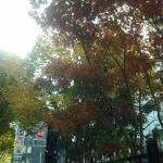 in autumn