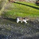 Oned cat at Leap Castle