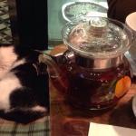 Kitty&tea