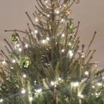 Xmas tree for the festive season