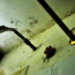 Ceiling shower, room #1.