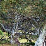ecocrackenback grounds