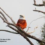 Birding at MPS Village