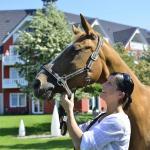 Pferdekoppeln am Hotel
