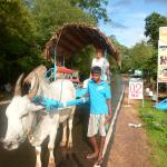 Tour Driver in Sri Lanka - Day Tours