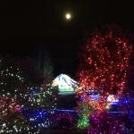 Zoo lights with the moon above
