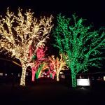 Beautiful trees at Holiday Lights on the Lake