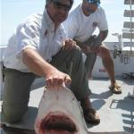 8' 150 lb. Bull Shark