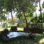 dans les  jardins  du  ras  nungwi