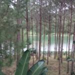 Side Lake View