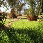 Palm grove near Dar Marhaba