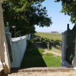 The vineyards Groot Constantia