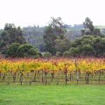 Rosevears Vineyard Cellar Door