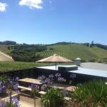 the view from wine tasting