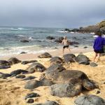Maui Paradise Tours LLC