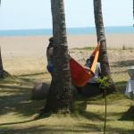 hammock in front of hotel