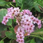 Flowers in Garden Area, Allied Arts, Menlo Park, Ca