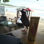having breakky with a local