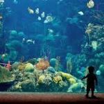 acuario en Tampa