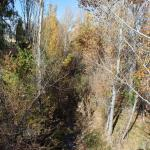 Santa Fe River Park at Galisteo Street, Santa Fe, New Mexico Nov 2014