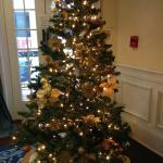 Lincoln Lounge Tree