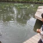 Alimentando peces en la terraza del Restaurante