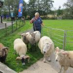 The sheep show outside the Centre.