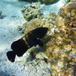 Le jardin de corail