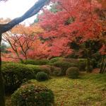 九年庵の庭園(秋)
