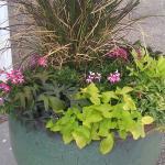 Our Patio Garden