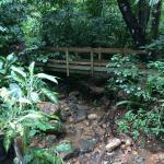 Beautiful trails and bridges