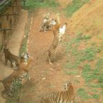 Yunnan Wildlife Park
