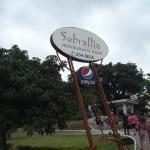 Photo of Sobrallia
