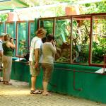 Reptile Park near Dominical