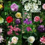 A collage of flowers from the garden