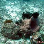 Photo de Blue Ribbon Divers