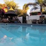 Chameleon Backpackers pool